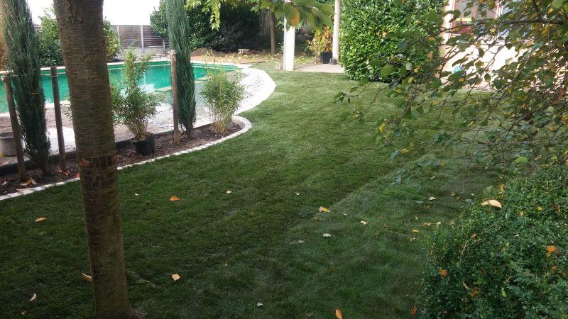 Rasen und Wasser