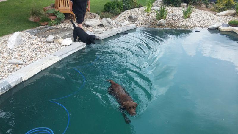 Auch Hunde lieben Wasser