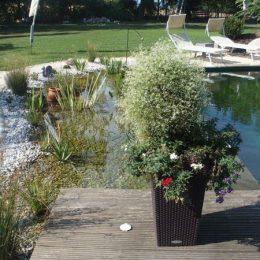 Wasser und Pflanzen