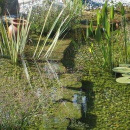 Uferzone Schwimmteich