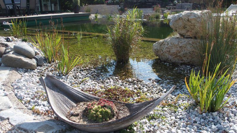 Uferbepflanzung am Schwimmteich Regensburg