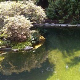 Lebendiger Garten mit Naturteich umrahmt mit Stauden und Gehölzen