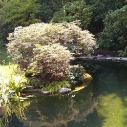 Rand- und Uferbepflanzung bei Naturteichen sind nicht nur schön, sondern auch sinnvoll.